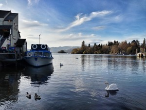 Swan on Bowness